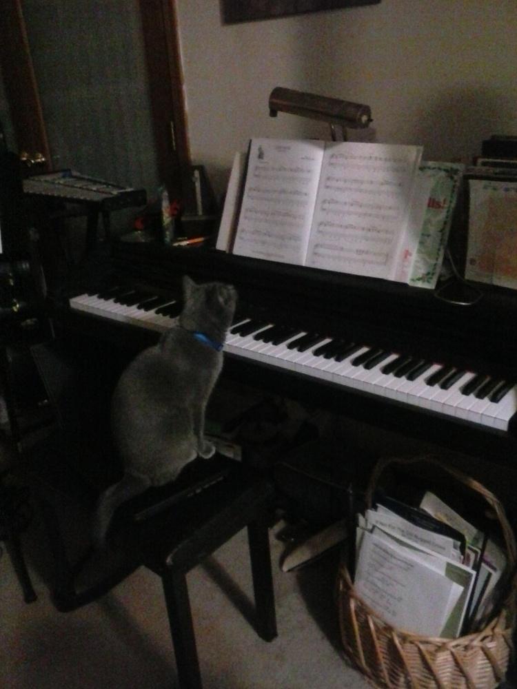 Cat at Piano